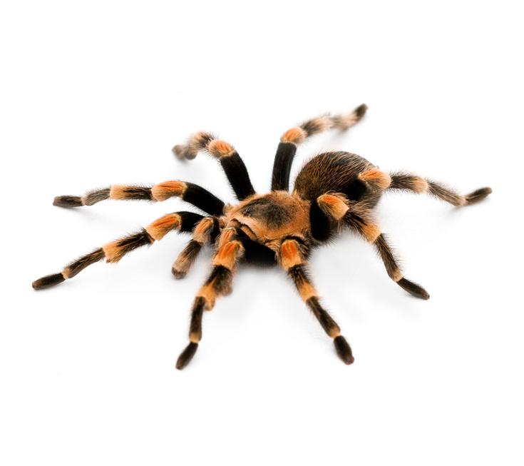 Im Zeichen der Spinne